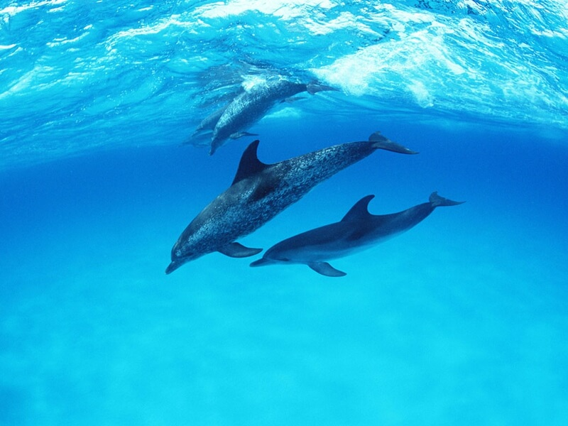 21 Interesting Facts About Dolphins