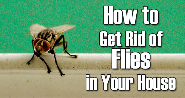 how to get rid of fruit flies fast and easy. Black Bedroom Furniture Sets. Home Design Ideas