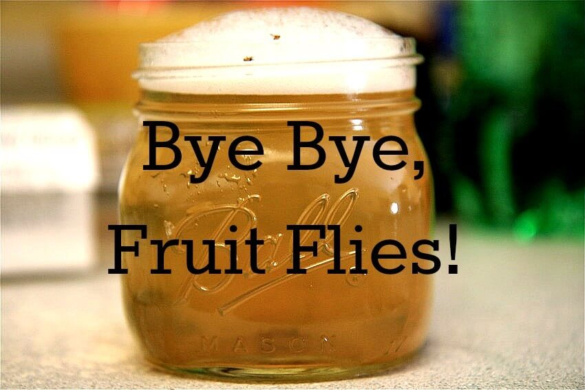 best fruits to eat how do i get rid of fruit flies