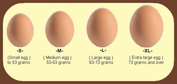 How Many Calories In An Egg? Health Meets Taste!