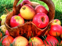 Apples - Slow Down the Aging Process