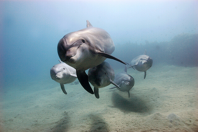 Facts-About Dolphin-14
