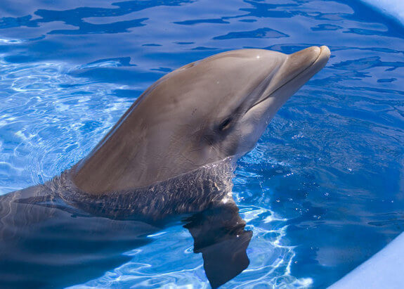 Facts-About Dolphin-2