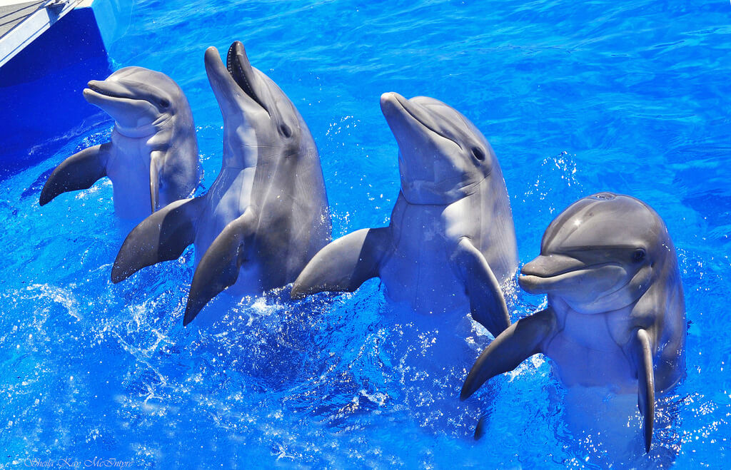 Facts-About Dolphin-21
