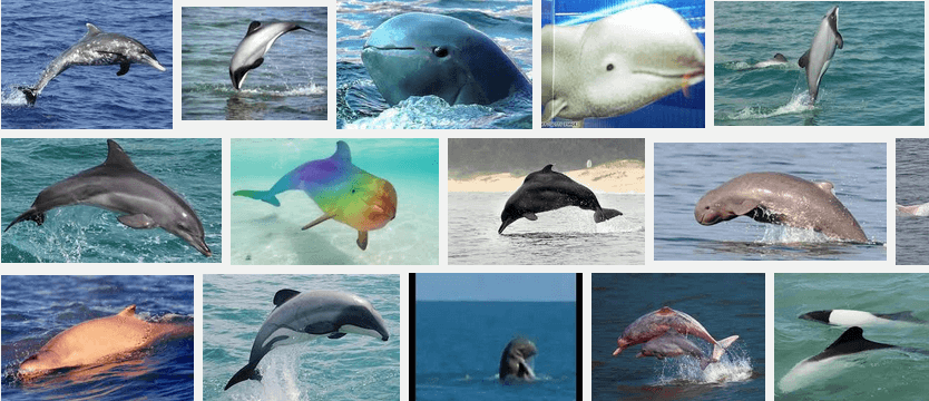 Facts-About Dolphin-9