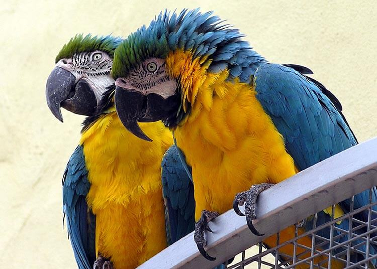 Amazon-Rainforest-Animals-Macaw