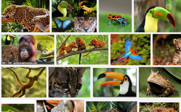 Amazon Rainforest-Featured