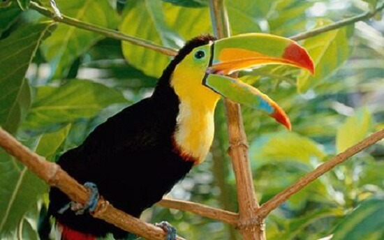 Amazon-rainforest-facts-14