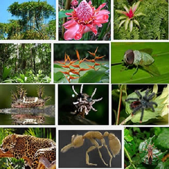 amazon rainforest plants. amazon rainforest facts plants