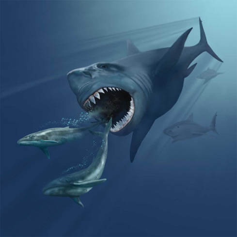 Megalodon-Facts-The Ocean's Top Predator