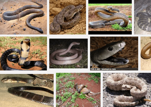 Most Poisonous Snakes in the World-featured image