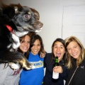 Hilarious Dogs Photobombs