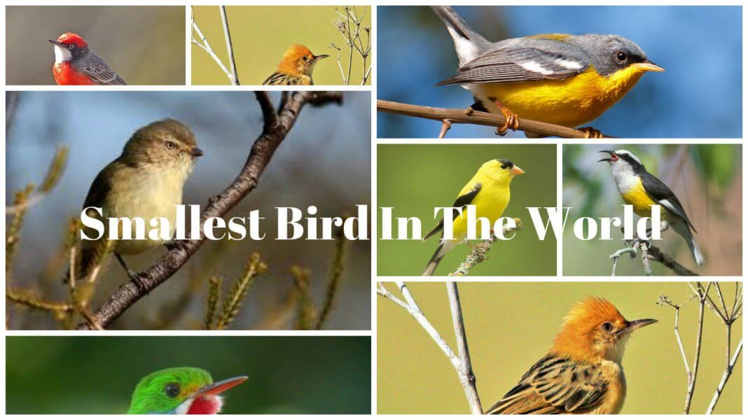 Smallest Bird In The World-featured