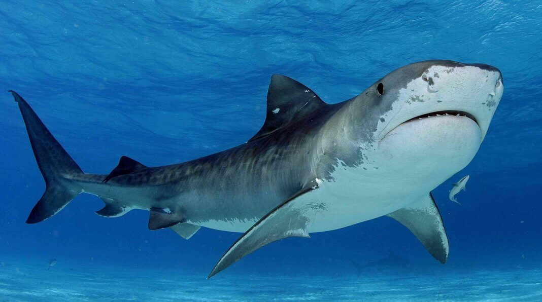 facts about sharks