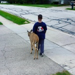 Boy walks a Blind Deer