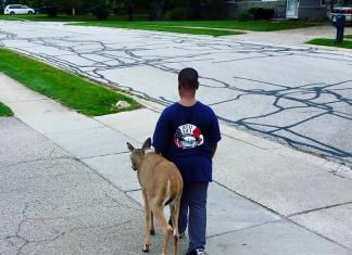 Boy walks a Blind Deer