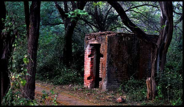Most Haunted Places In Delhi , Delhi Ridge Area