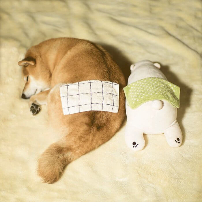 This Dog Loves To Sleep In The Same Position As His Toy-9