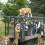 What a Zoo should look like