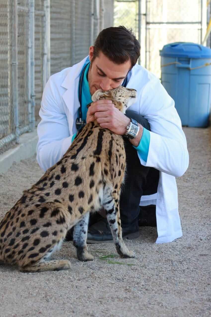 Hot Veterinarian snuggling a serval.-Dr. Evan Antin