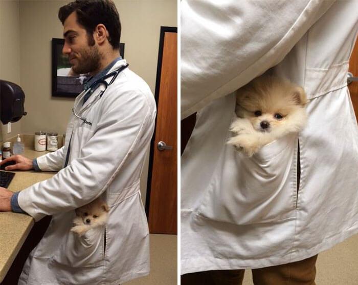 Hot and cute Veterinarian-Dr. Evan Antin
