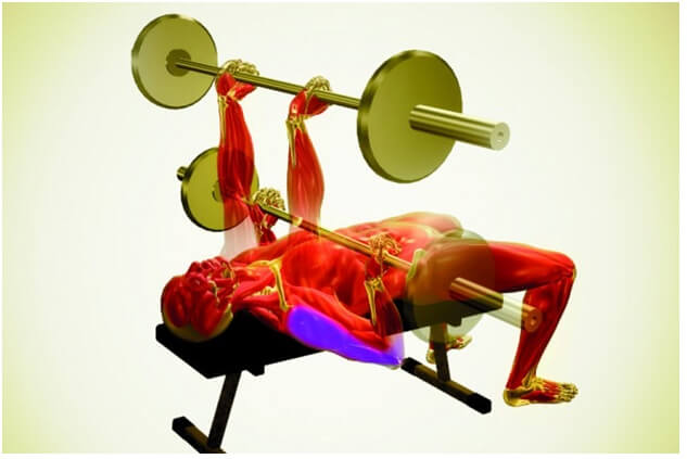 Best Chest Exercises For Men Reverse Grip Bench Press