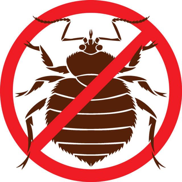 where do bed bugs come from originally