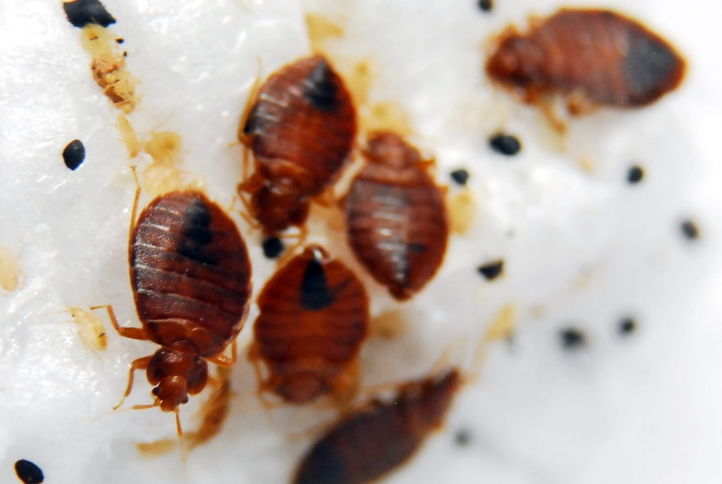 How Do You Know If You Have Bed Bugs