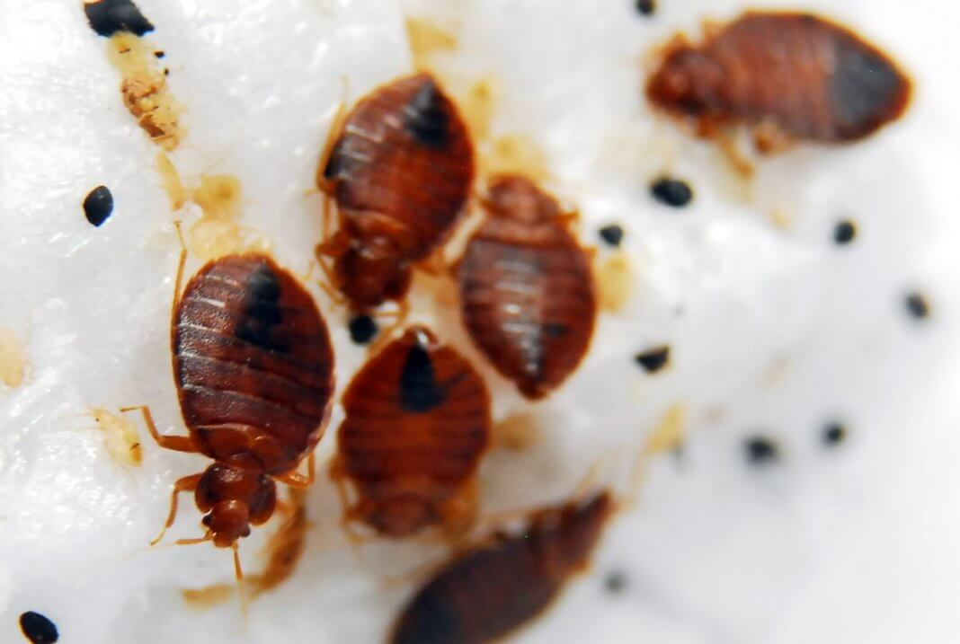 Bed Bugs Sprays In India
