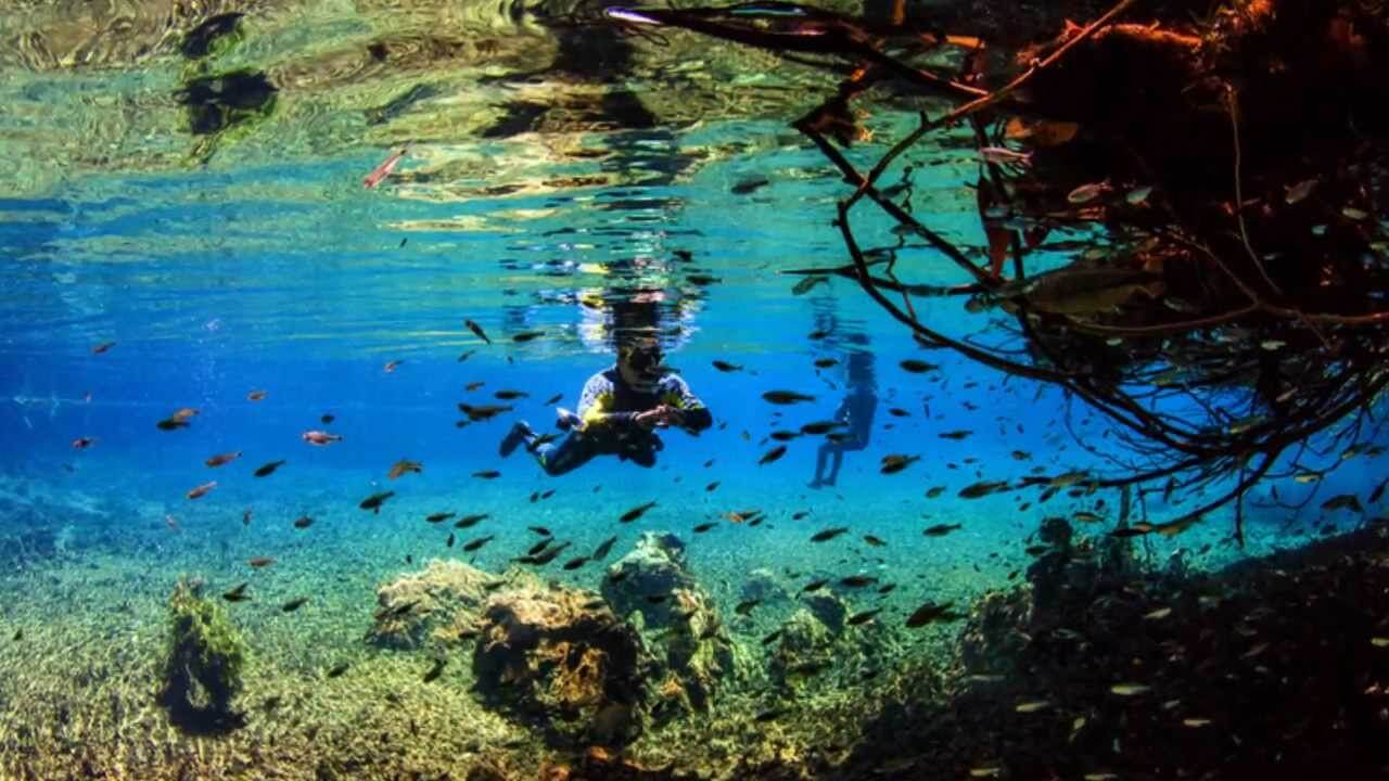 35 Places To Swim In The World's Clearest Water-Bonito - Brazil