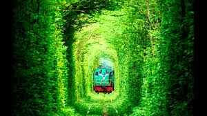 The Most Beautiful Places In The World You Didn't Know Existed-TUNNEL OF LOVE - UKRAINE