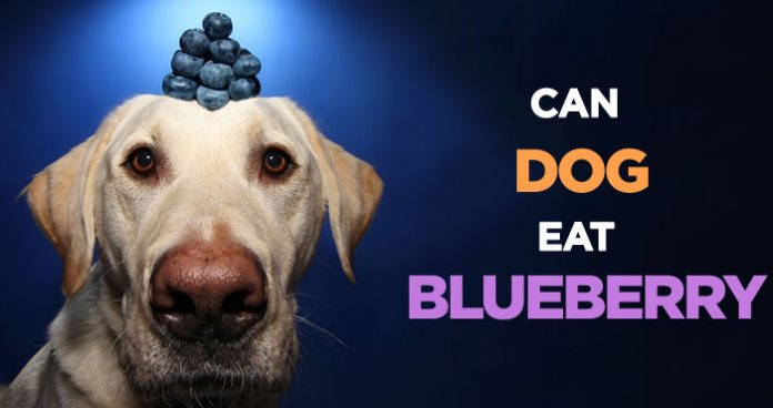 Can Dogs Eat Blood Oranges