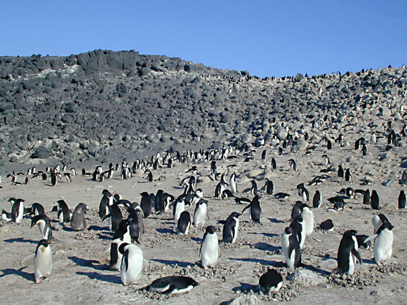 Penguins living Habitat
