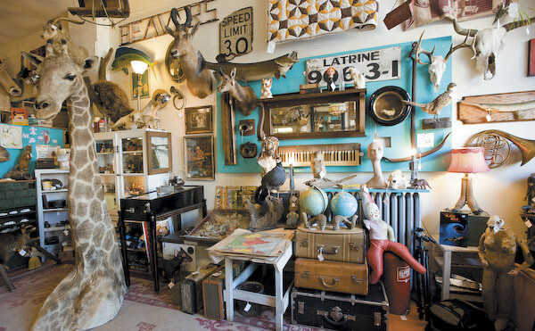 things to buy in Chicago Woolly Mammoth Antiques & Oddities