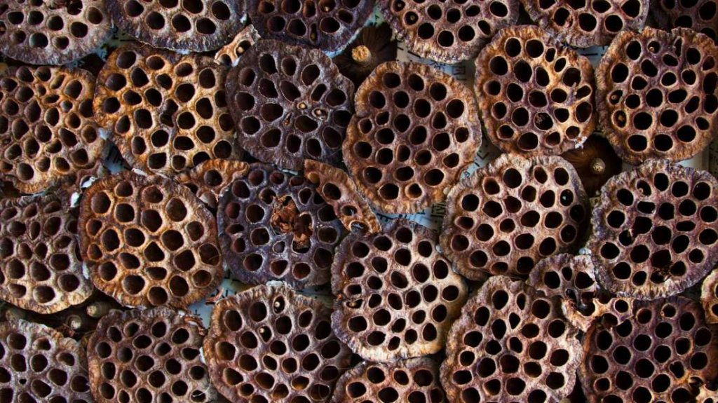 Phobia Of Holes Trypophobia Test Causes Symptoms Cure