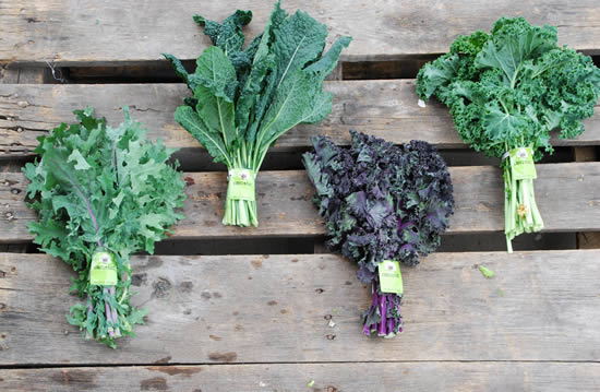 types of kale and benefits of kale