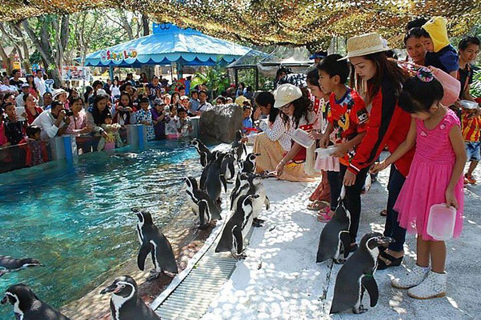 things to do in bangkok: dusit zoo