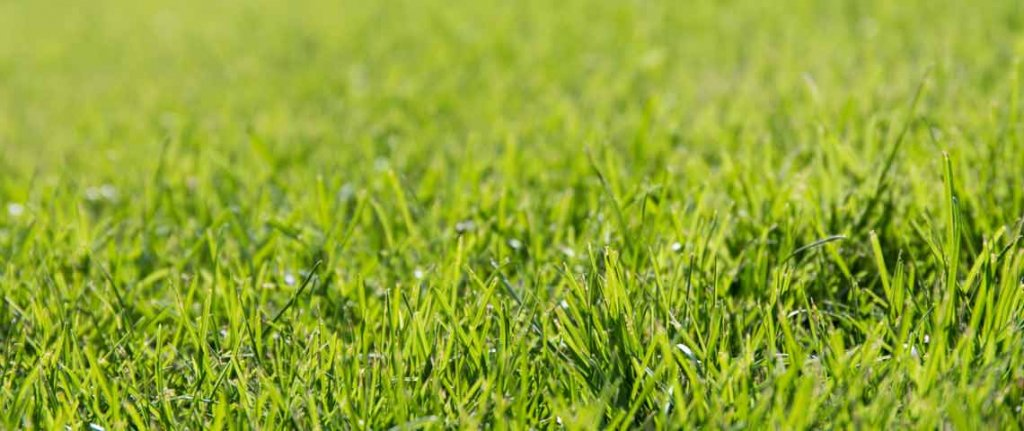 Facts About Lawns