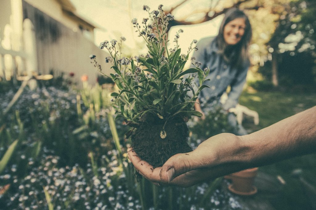 Hassle-Free Garden