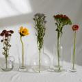 Indoor Plants Trends